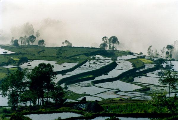 Paysage enbrumé dans une vallée d'Indonésie