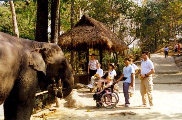Guide handicapé devant un éléphant