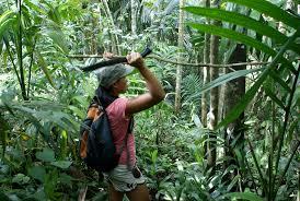 Aventure jungle