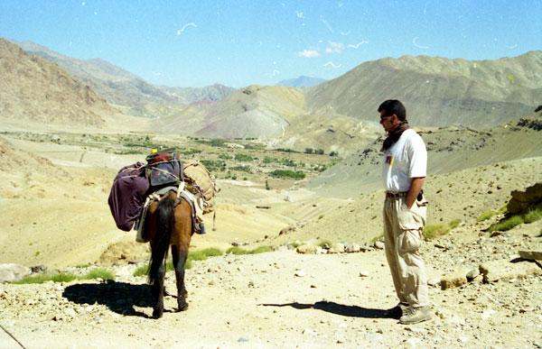 Exploitation du cheval en Inde