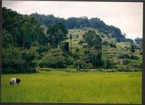 paysage vert entre montagne et forêt en indonésie