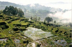 culture en terrasse indonésie