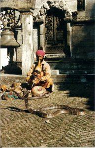 Serpent au Népal voyager en Asie