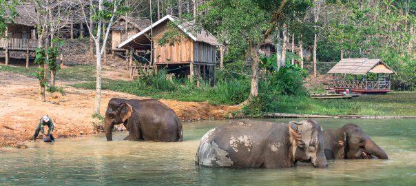 Laos, pays au million d'éléphant